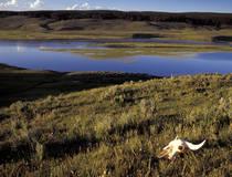 Yellowstone National Park, Wyoming/Idaho/Montana