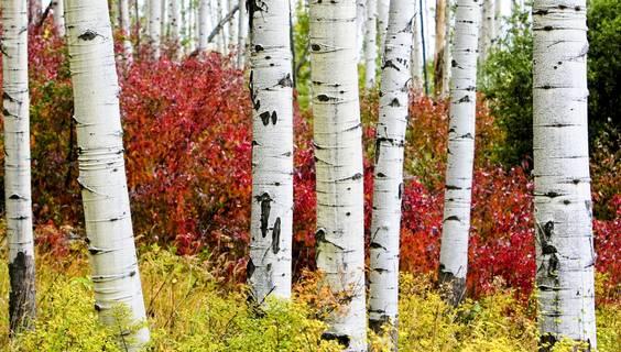 Colorado Indian Summer © Colorado Tourism Office